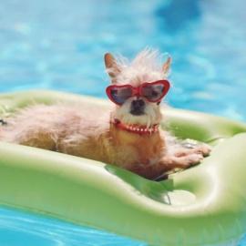 Dog Swim Day At Lake Vista Pool
