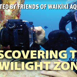 Waikiki Aquarium's Distinguished Lecture Series: Discovering the Twilight Zone