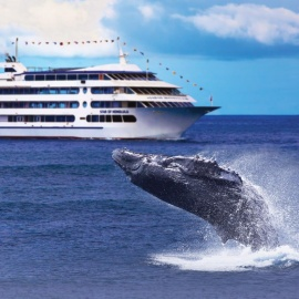 Star of Honolulu Welcomes Guests Aboard Hawaii's Most Popular Whale Watch Cruise
