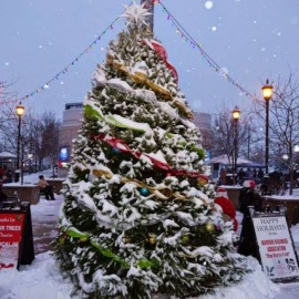 Mayfair Tree Lighting and Holiday Market