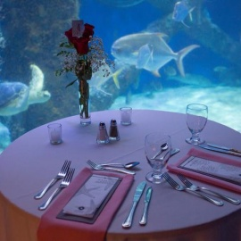 Valentine's Dinner- Sold Out