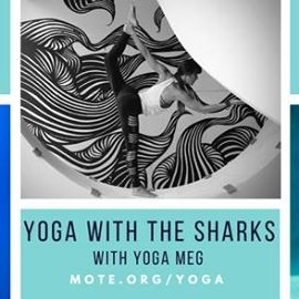 Yoga with the Sharks