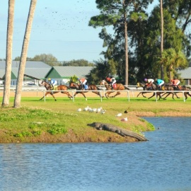 High Stakes Saturday at Tampa Bay Downs