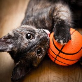HART's Meow Madness Online Auction and Spring Fling