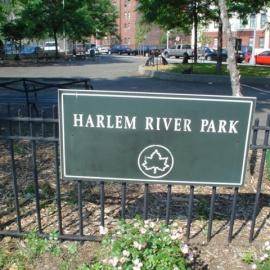 Harlem profile image