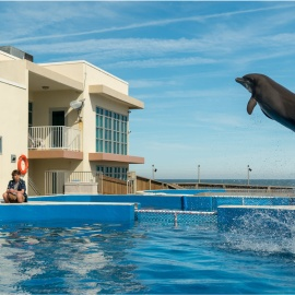 Filmed in Tampa Bay, Bernie the Dolphin is family-friendly Florida fun218