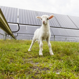 Samsula solar farm a sign of power to come78