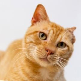 Austin Pets Alive! Pet of the Week: Conan92